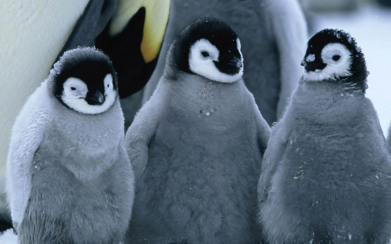Penguin: l'algoritmo di penalizzazione di Google